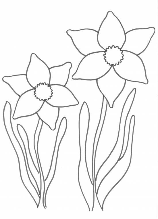 Afbeelding Kip Kleurplaat Voorjaarsknutsel Narcis