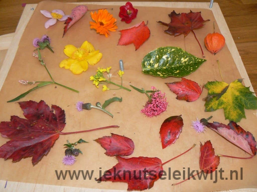 bladeren drogen