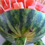 Watermeloen egel traktatie